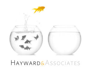 Hayward & Associates Ltd